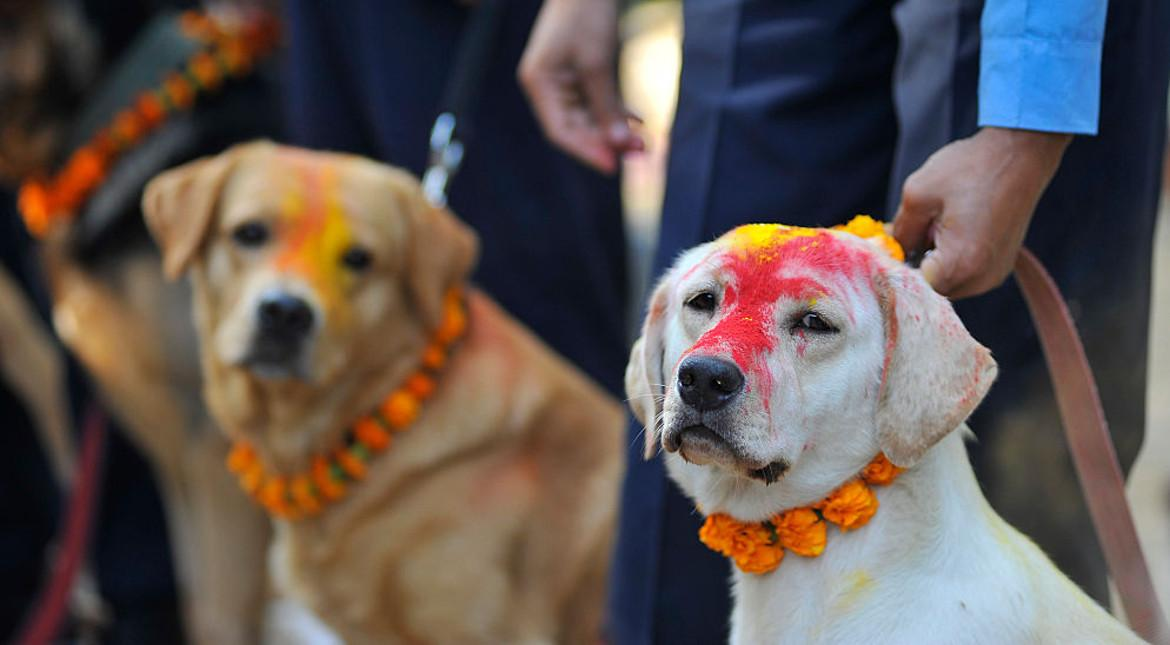 Nepal celebrates doggies with day-long festival