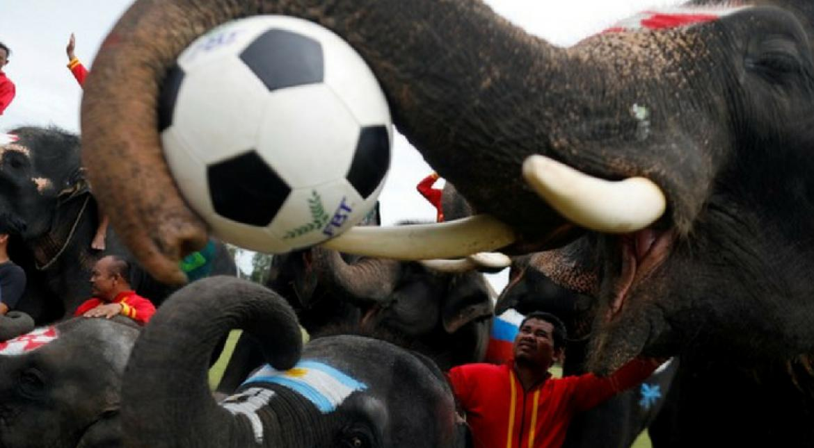 Elephants dribble to raise awareness against illegal gambling