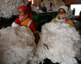 India's cotton exports could hit four-year high on price rally, weak rupee