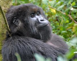 Five park rangers, driver killed in Democratic Republic of Congo's Virunga wildlife sanctuary