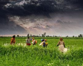 How the Union budget can develop Indian agriculture