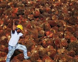 New Singapore exchange kicks off trading with palm oil futures