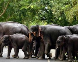 Shock treatment as Sri Lanka battles wild elephants