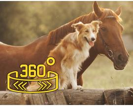 360 WION: All Creatures Great And Small