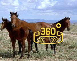 360 WION: US inmates train wild horses