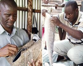 Kenyan fish leather, the new trade battling huge scale waste