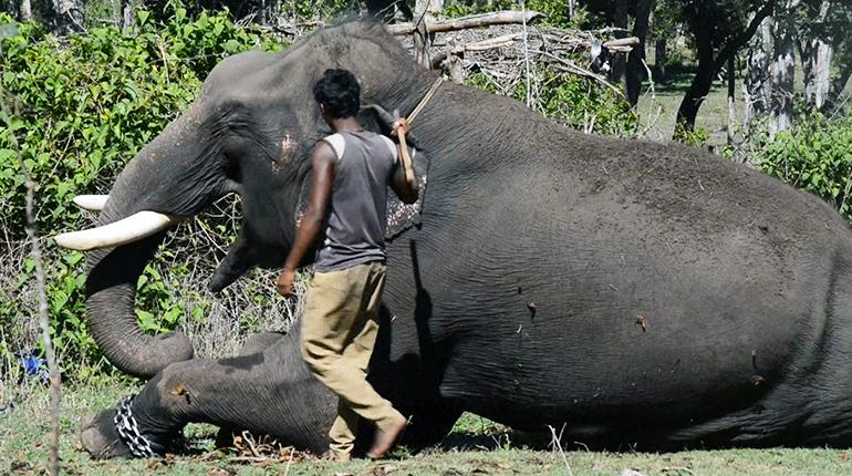 The open air 'jail' for India's killer elephants